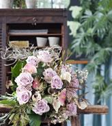 februari_roos_koningin_der_bloemen_4