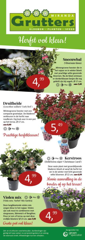 Herfst aanbieding planten Miranda Grutters